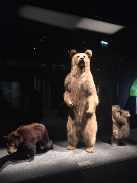 Espèces d'ours. Muséum national d'histoire naturelle de Paris (c) Perygus - Arts & Stuffs