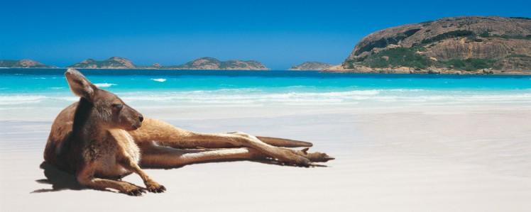 kangourou plage.jpg